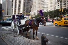 Koński i Kareciany czekanie Dawać przejażdżce w Miasto Nowy Jork Fotografia Stock