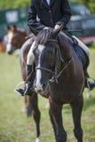 Koński jeździec obraz royalty free