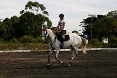 koński jeździec zdjęcie royalty free