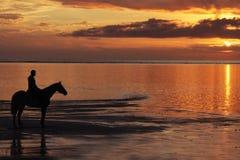 koński jeździecki zmierzch Zdjęcia Royalty Free