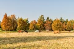 Koński jesień dzień Zdjęcie Stock