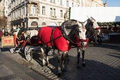 Koński kareciany czekanie dla turystów na Bożenarodzeniowym Starym rynku Zdjęcie Stock