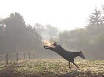 Koński kopnięcie Zdjęcia Stock