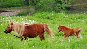 Koński mum i jeden troszkę zdjęcia stock