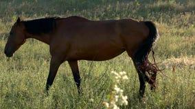Koński odprowadzenie na łące zbiory
