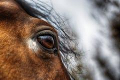 Koński oko szczegół Zdjęcia Royalty Free