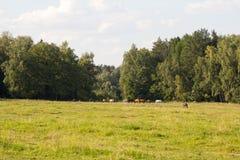 Koński pasanie na krawędzi drewna Fotografia Royalty Free