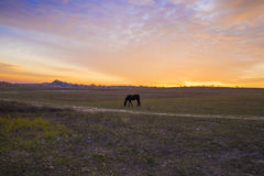 Koński pasanie w paśniku blisko pustych wiejskich dróg agains Fotografia Stock