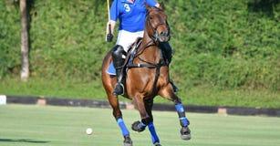 Koński polo gracz jedzie konia w polo dopasowaniu obraz royalty free