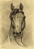 koński portret Fotografia Stock