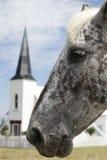 Koński portret przed kościół Zdjęcie Royalty Free