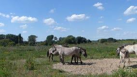 Koński rodzinny odpoczywać na ziemi zbiory