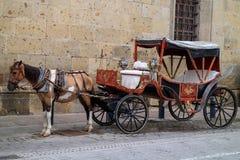 Koński samochód w Guadalajara zdjęcia royalty free