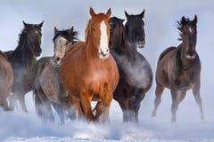 Koński stado biegający w śniegu zdjęcie stock