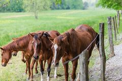 Koński stado stojak na łące obrazy royalty free