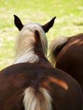 Koński szczegół, zadek (2) zdjęcia stock