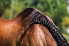 Koński włosy Zdjęcia Royalty Free