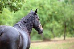 Koński widok na zielonej łące Obraz Royalty Free