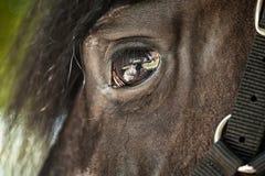 Koński zbliżenie Zdjęcia Stock