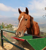 Koński zbliżenie Obrazy Stock