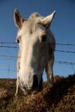 Koński zbliżenie Zdjęcie Stock