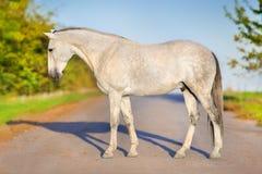 Koński zewnętrzny plenerowy Zdjęcie Royalty Free