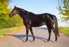 Koński zewnętrzny plenerowy Zdjęcia Royalty Free