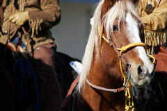 końskich mężczyzna halny stary zachód obrazy stock