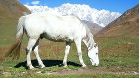 Końskie góry zwierzęce zdjęcie wideo