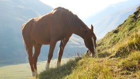 Końskie góry zwierzęce zbiory