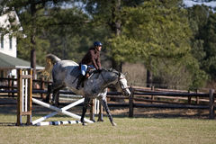końskie przeszkody skacze jeźdza Obraz Royalty Free