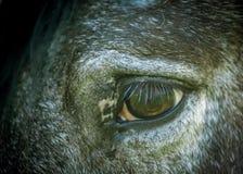 Końskie rzęsy Obraz Stock