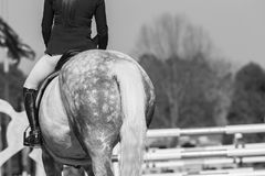 Końskiego jeźdza przedstawienia Skokowy rocznik Fotografia Royalty Free
