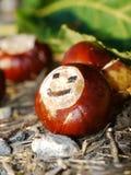 Końskiego kasztanu jesieni spadku smiley Zdjęcia Stock
