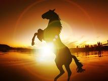 Końskiego sylwetki wolności zmierzchu Energetyczny życie Uwalnia Zdjęcia Royalty Free