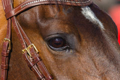 Końskiej głowy oka zbliżenie Zdjęcie Stock