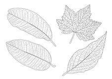 Kośćcowi liście wykładający projekt na białym tle royalty ilustracja