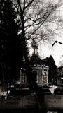 Kościół w Lutsk, Ukraina & wronie, obrazy royalty free