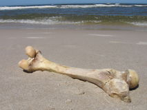 kości Zdjęcia Stock