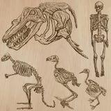 Kości, czaszki, koścowie - freehands, wektor Obrazy Royalty Free
