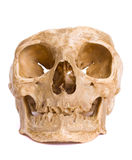 kości głowa Fotografia Stock