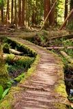 koślawa ścieżka Zdjęcie Royalty Free