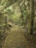 Koślawa ścieżka w drewnach Zdjęcia Royalty Free