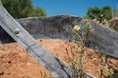 Koślawa Drewniana brama (3) Fotografia Stock