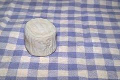 Koźli ser zdjęcie royalty free