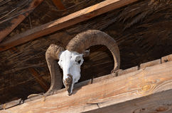 Koźlia czaszka na słomianym dachowym promieniu Obraz Stock