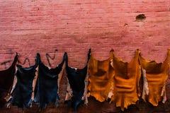 Koźlie skóry druing na ścianie w lokalnej garbarni, Maroko Obraz Stock