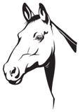 koń ilustracja wektor