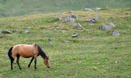 koń Zdjęcia Stock