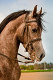 Koń Fotografia Royalty Free